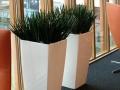 plantes d'intérieur bureaux