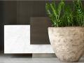 plantes d'intérieur zamioculcas