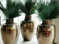 plantes d'intérieur yucca